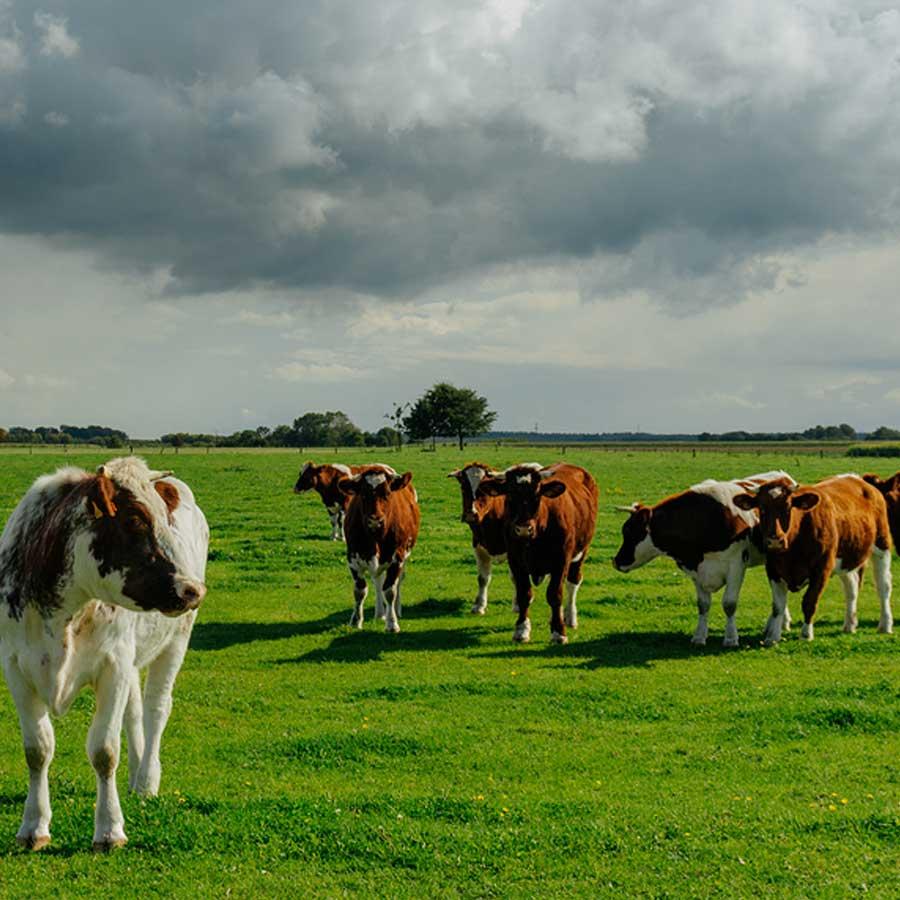 Livestock Services