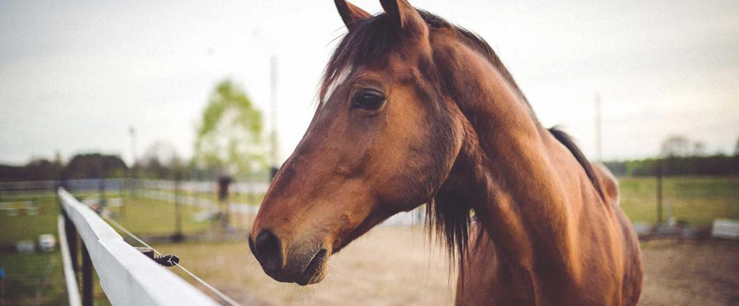 Equine & Livestock Veterinarian
